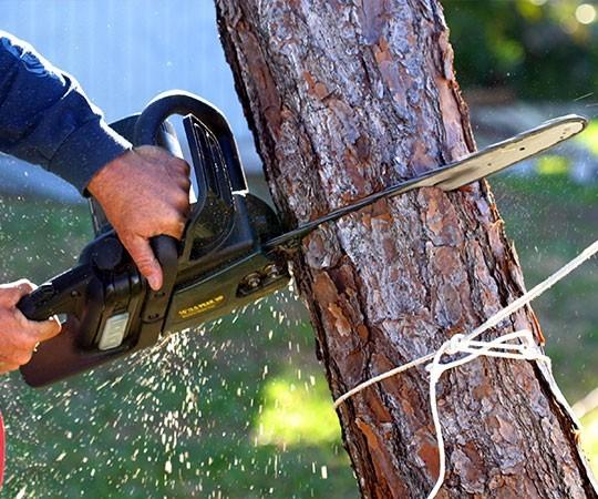 Спил деревьев в Новосибирске и Новосибирской области
