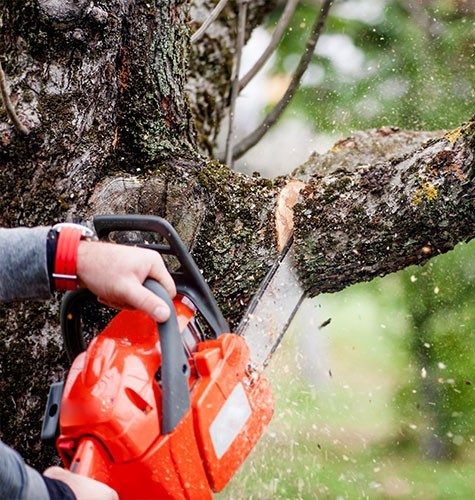 Услуга по спиливанию деревьев в Новосибирске